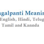 Pagalpanti Meaning in English Hindi Telugu Tamil and Other Pagalpanti Movie Details
